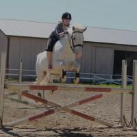 kaunila-hevosille2